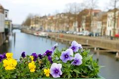 Blumen auf den Straßen von Gorinchem Stockfotos