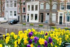 Blumen auf den Straßen von Gorinchem Lizenzfreie Stockbilder