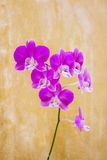 Blumen auf der Badezimmerwand, abstrakte Art lizenzfreie stockbilder