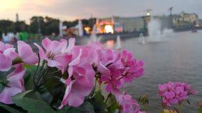 Blumen auf der Brücke in Moskau Stockfotografie