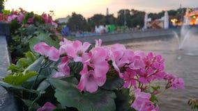 Blumen auf der Brücke in Moskau Lizenzfreie Stockfotos