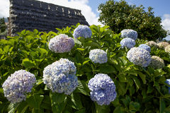 Blumen auf der Insel von Madeira Lizenzfreie Stockbilder