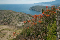 Blumen auf der Küste Lizenzfreie Stockfotos