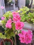 Blumen auf der Rohrleitung Stockbild