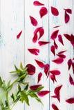 Blumen auf der Tabelle Stockfotografie