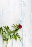 Blumen auf der Tabelle Lizenzfreie Stockfotos