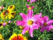 Blumen auf Dolomit, Italien, August 2007 stockfotografie