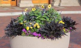 Blumen auf einem Becken Lizenzfreies Stockbild