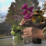 Blumen auf einem Fenster lizenzfreie stockfotos