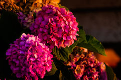 Blumen auf einem Floristen Stockfotos