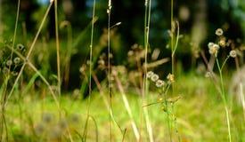 Blumen auf einem Gebiet Stockfotos