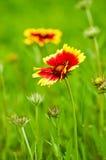 Blumen auf einem grünen Hintergrund Stockfotos
