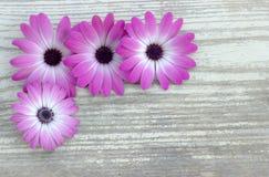Blumen auf einem hölzernen Brett Hintergrund Lizenzfreies Stockbild