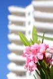 Blumen auf einem Hintergrund des Appartementkomplexes Stockbilder