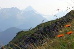 Blumen auf einem Hintergrund von Bergen Stockbilder