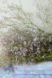 Blumen auf einem Kasten lizenzfreies stockbild