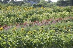 Blumen auf einem Landwirtgebiet stockfotos