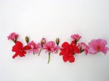 Blumen auf einem weißen Hintergrund stockfoto
