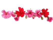 Blumen auf einem weißen Hintergrund stockfotografie