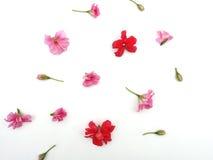 Blumen auf einem weißen Hintergrund stockbilder