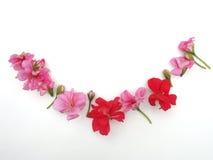 Blumen auf einem weißen Hintergrund lizenzfreies stockbild