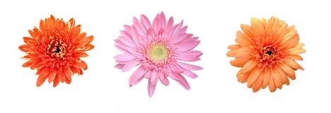 Blumen auf einem weißen Hintergrund lizenzfreies stockfoto