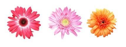Blumen auf einem weißen Hintergrund lizenzfreie stockfotografie