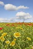 Blumen auf einem wilden Sommergebiet Stockbilder