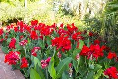 Blumen auf einer Anlage Stockfoto