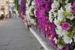 Blumen auf einer metallischen Wand Lizenzfreie Stockfotografie