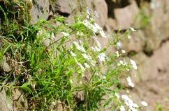 Blumen auf einer Steinwand auf einer Steigung Lizenzfreie Stockfotografie