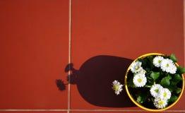 Blumen auf einer Terrasse Stockbilder