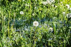 Blumen auf einer Wiese Lizenzfreie Stockbilder