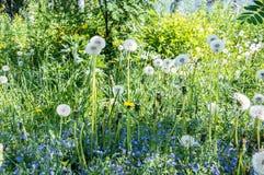 Blumen auf einer Wiese Stockfoto