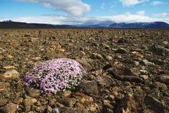 Blumen auf Felsen lizenzfreie stockfotos