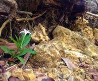 Blumen auf Felsen Stockfotografie