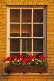 Blumen auf Fenster am Abend Lizenzfreie Stockfotos