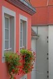 Blumen auf Fenstern Stockfotografie