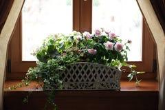Blumen auf Fensterrahmen Lizenzfreie Stockfotos