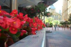 Blumen auf Geschäftsstraße Lizenzfreie Stockfotos