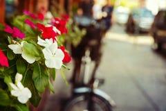 Blumen auf Geschäftsstraße Städtischer Hintergrund Stockfotografie