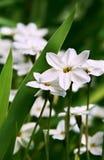 Blumen auf grünem Rasen Stockfotos
