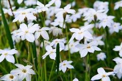 Blumen auf grünem Rasen Lizenzfreie Stockbilder