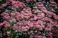 Blumen auf Graasten ziehen sich Ferienhaus des königlichen Dänische zurück stockbilder