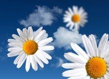 Blumen auf himmlischem Himmel Stockfoto