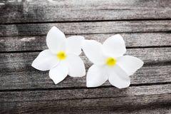 Blumen auf Holz, masern hölzernes mit Plumeriablume lizenzfreie stockbilder