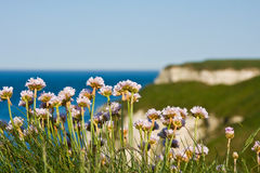 Blumen auf Klippe Lizenzfreies Stockfoto