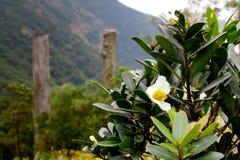Blumen auf Klugheits-Weg stockbilder