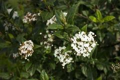 Blumen auf Natur Stockbild