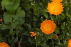 Blumen auf Natur Lizenzfreie Stockfotos